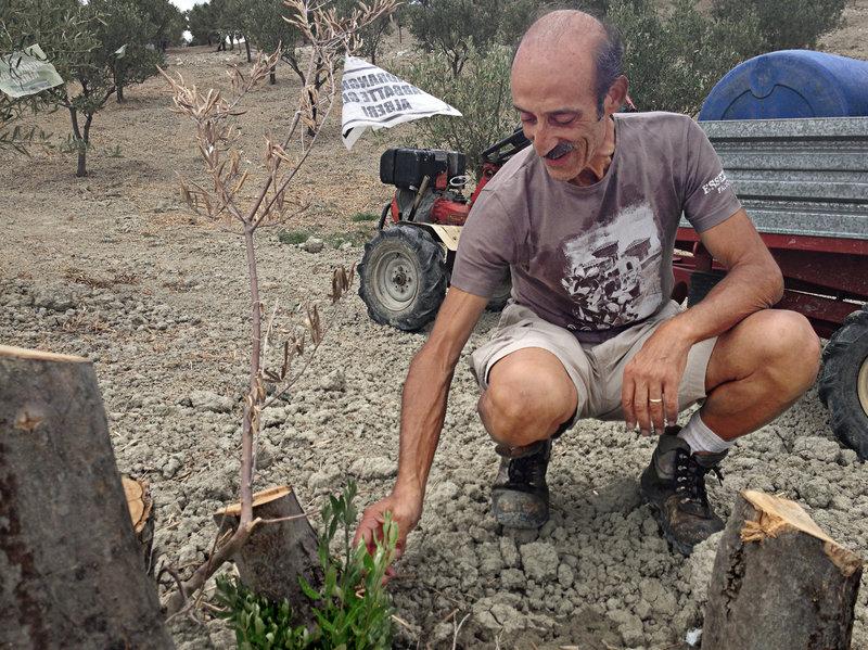 Farmer Daniele Pacicca