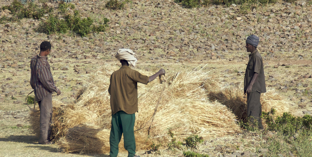 Farmers - hay