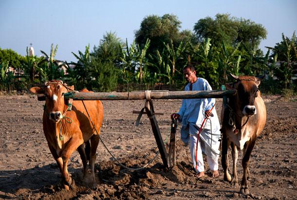 Farming Plowing