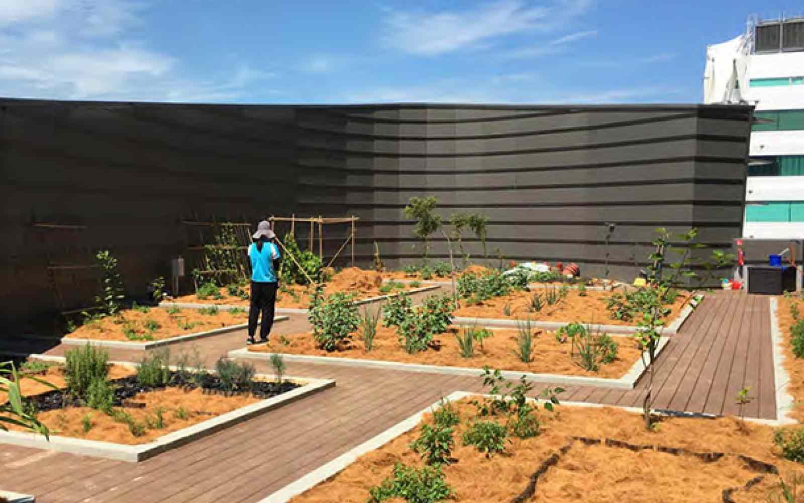 Bjorn Low Edible Garden City Ashoka Everyone A Changemaker
